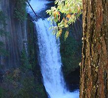 Toketee Falls by jmethe
