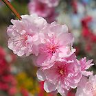 Blossoms and Bugs by Penny Smith