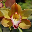 Cymbidium Beauty by Penny Smith