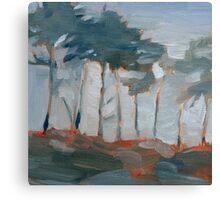 cypress trees and fog Canvas Print