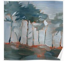 cypress trees and fog Poster