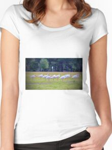 Ibises On The Ball Field Women's Fitted Scoop T-Shirt