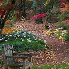 Autumn in Mt. Wilson by chasingsooz