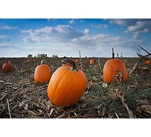 Pumpkin Patch Time Photographic Print