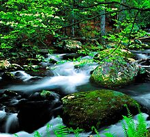 MIDDLE PRONG LITTLE RIVER, SPRING by Chuck Wickham