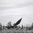Heron in Flight by Diane  Kramer
