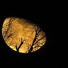 Winter Moon and Silhouetted Tree by Diane Arndt