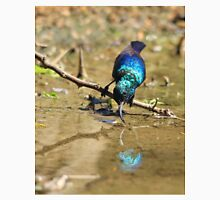 White Belly Sunbird - Beautiful Blue  Unisex T-Shirt