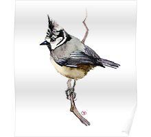 bird on branch Poster