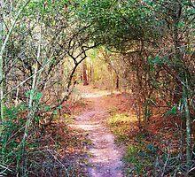 Enchanted Walkway by Nathan Little