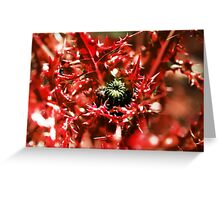 Deadly Thistles Greeting Card