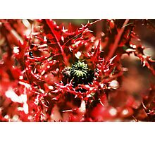 Deadly Thistles Photographic Print