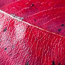 Abstract Leaf Color Study 2 by Kari Sutyla