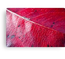 Abstract Leaf Color Study 2 Canvas Print