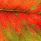 Abstract Leaf Color Study 3 by Kari Sutyla