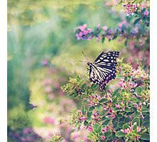 Pretty Butterfly Orange Markings Pink Flowers Green Leaves Photographic Print