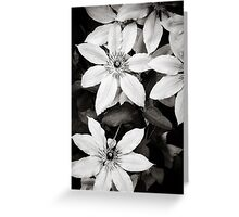 Clematis Flowers - Black & White Greeting Card