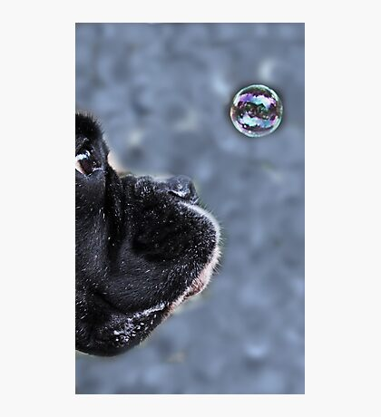 It's A Bubble -Boxer Dogs Series- Photographic Print