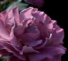 Mauve Peonie by Joy Watson