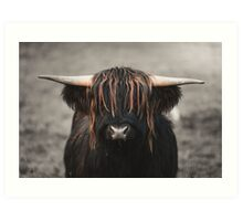 Highland Cow with awesome fringe.  Art Print