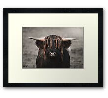 Highland Cow with awesome fringe.  Framed Print