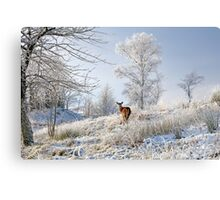 Glen Shiel Misty Winter Deer Metal Print