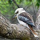 Shake a Tail Feather by John Sharp