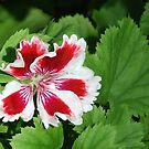 Red-white-green by Arie Koene