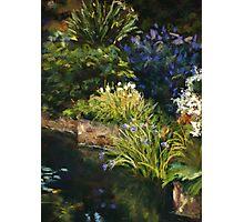 Hobart Botanic Gardens Photographic Print