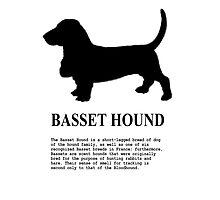 Basset Hound Photographic Print