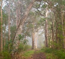 Misty Forest, Denmark by pennyswork