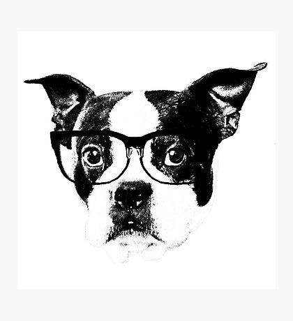 Boston terrier glasses  Photographic Print