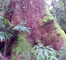 Pink Giants, in the Gold Coast Hinterland by MardiGCalero