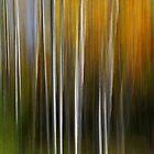 Autumn Aspens by Peter Hammer