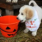 LGD - First Halloween by Doty