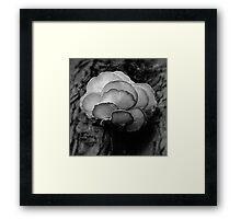 Natural Wonder Framed Print
