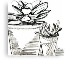 Agave Pots  Canvas Print