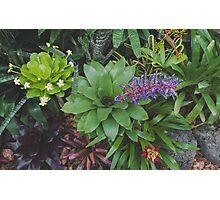 Tropical plants Photographic Print