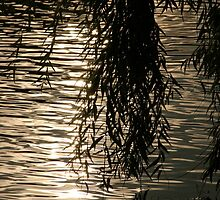 Weeping Willow Silhouette by Water by W. Lotus