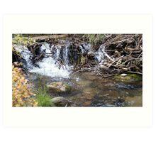 Natural Beaver Dam Art Print