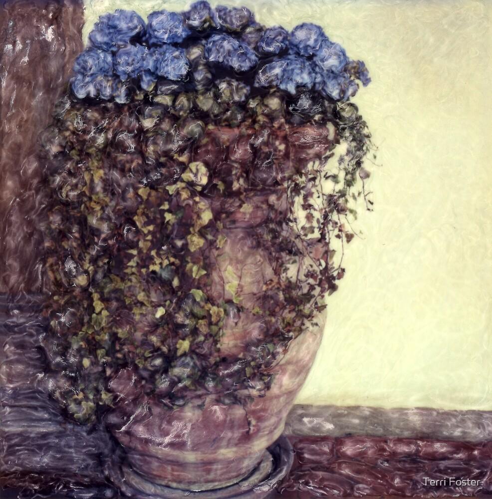 Hydrangea by Terri Foster