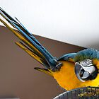 Yellow and blue parret by moregoodart