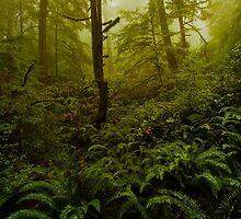 Overgrowth by Brandt Campbell