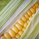 Corn on the Cob by Ellesscee