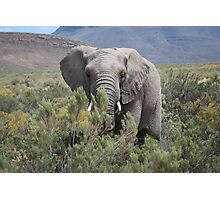 Elephant sees all Photographic Print