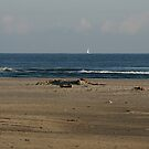 Beach View by patjila