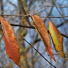 Hanging out to DRY! by Diane Trummer Sullivan