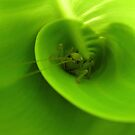 It's not that easy being green ... by Trish Meyer