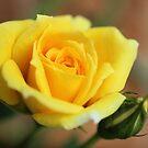 Yellow! by aprilann