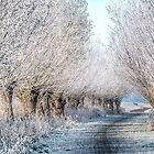 Holland colday in November by THHoang